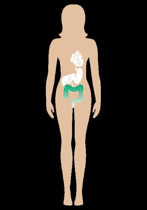 Diätpillen krankhafte Fettleibigkeit